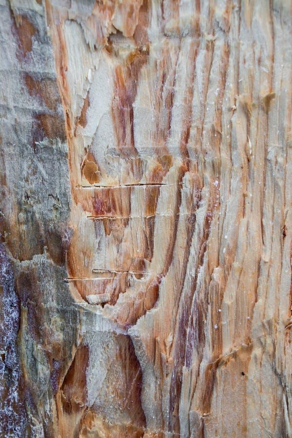 Texturen av sörjer, skogshuggareyxan, härlig naturlig bakgrund för vandal royaltyfri fotografi