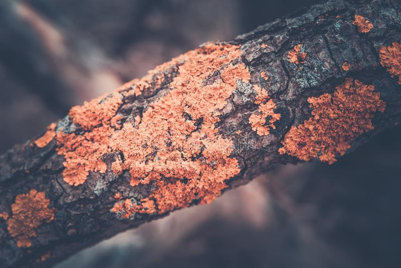 Texturen av stammen av ett träd fotografering för bildbyråer