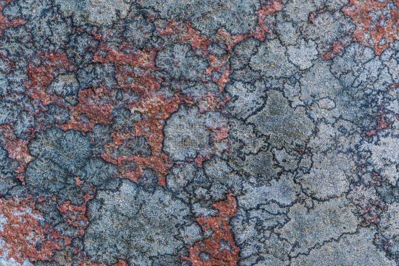 Texturen eller bakgrunden av den gamla stenyttersidan som täckas med laven och mossan royaltyfria bilder