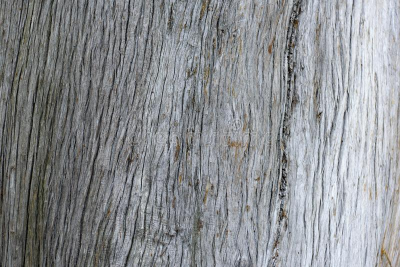 Texturen för bakgrund för trädskäll arkivfoto
