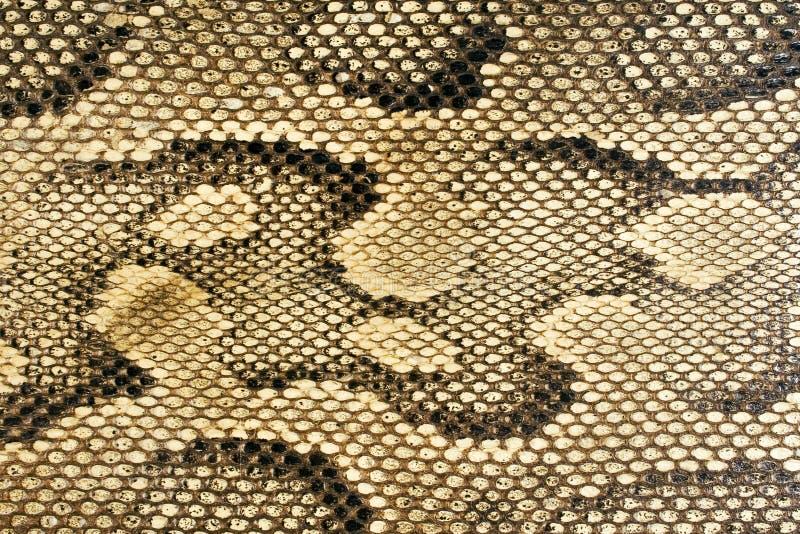 Texturen - Snakeskin #1 stock fotografie
