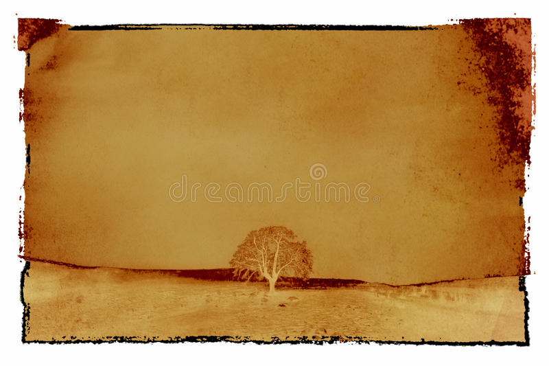 texturend葡萄酒树照片 向量例证