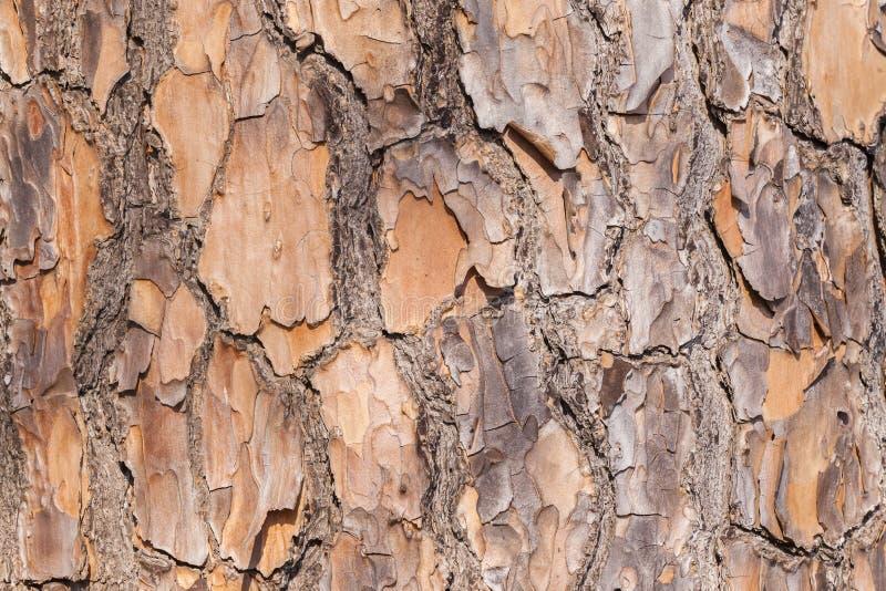Texturer för trädskäll arkivfoto