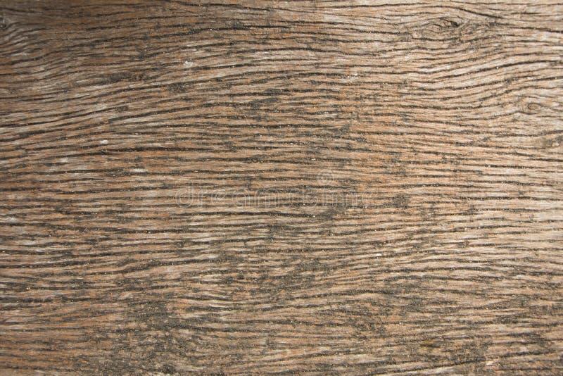 Texturera av wood bruk för skället som naturlig bakgrund royaltyfria foton