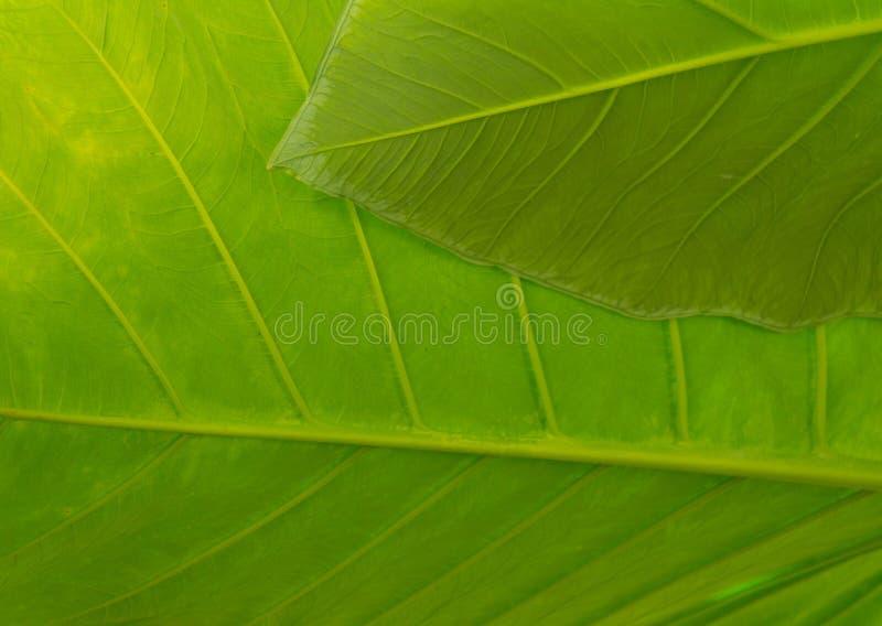 Texturerad bladmakrobakgrund i vibrerande gräsplan arkivfoto