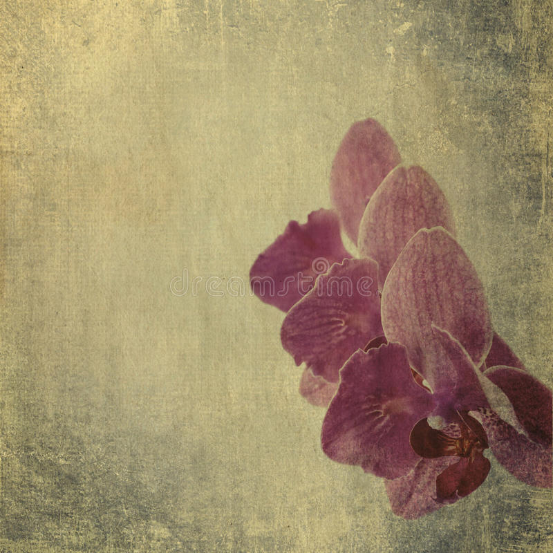 Texturerad gammal pappers- bakgrund med den magentafärgade orkidén royaltyfri bild