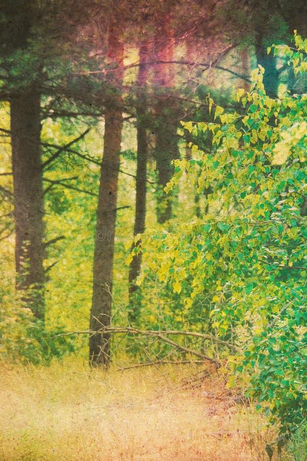 Texturerad grön pinjeskog royaltyfria bilder
