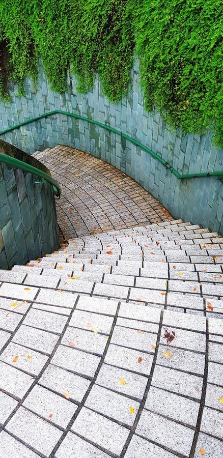 Texturerat av tegelplattamodellen ner trappan med den fulla gröna vinrankan på den grova väggen i trädgård parkera royaltyfri bild