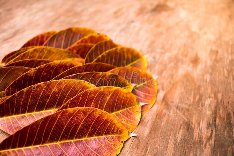 Texturerat Rubber blad fotografering för bildbyråer