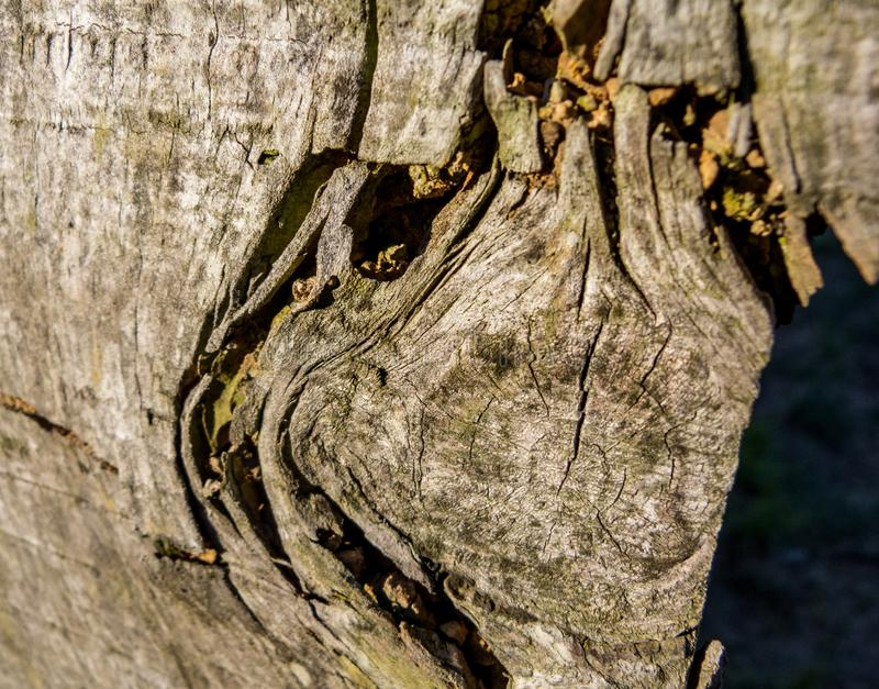 Wood texture in macro detail stock photography