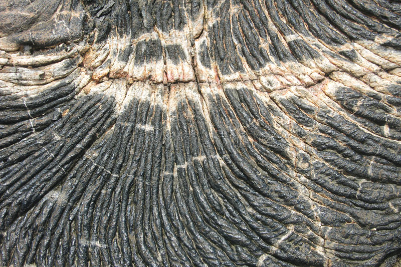 Textures of black lava (pahoehoe) in Santiago island. Galapagos, Ecuador stock images