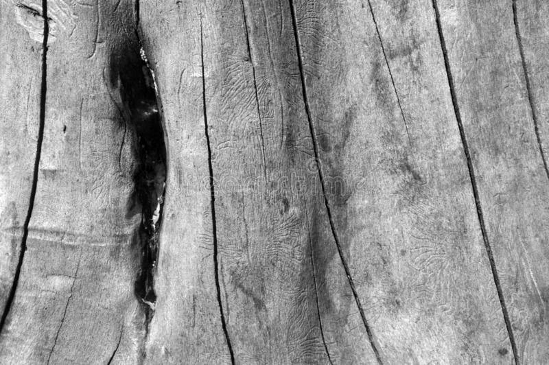 Textures BW wood set background with woodgrain detail royalty free stock photos