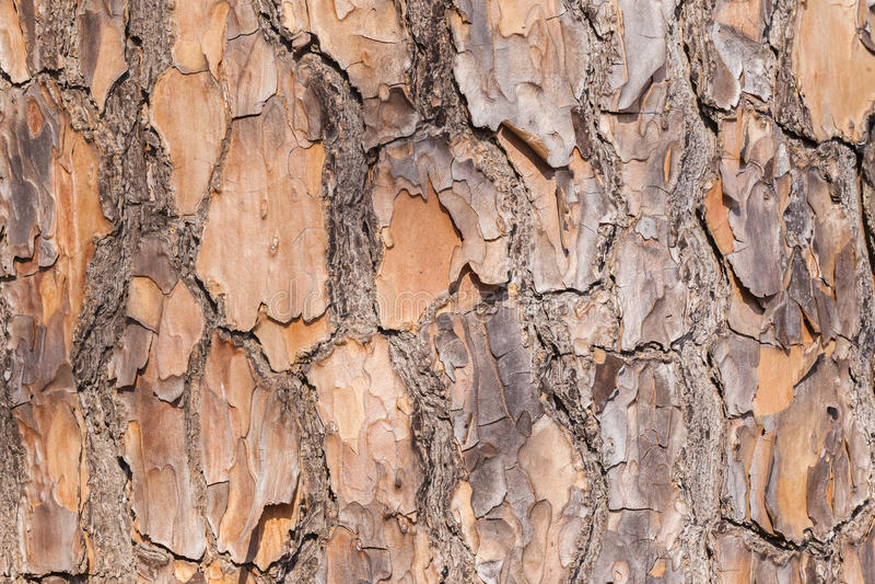 Textures d'écorce d'arbre photo stock