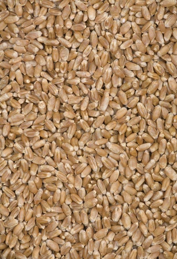 Textures de blé. photographie stock