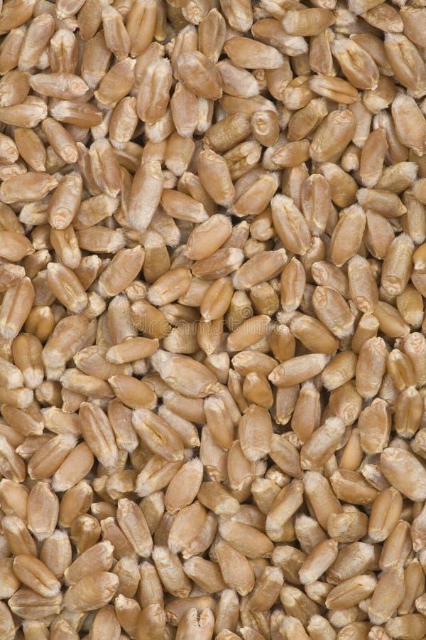 Textures de blé. image libre de droits