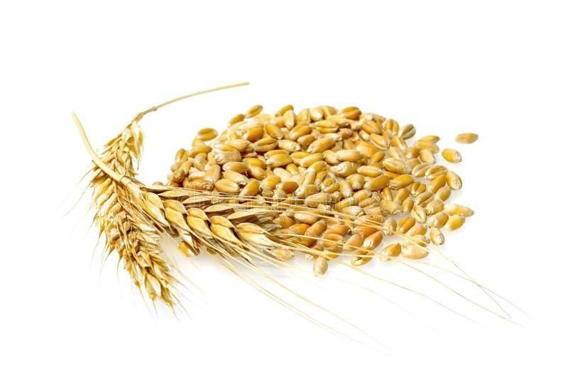Textures de blé image stock