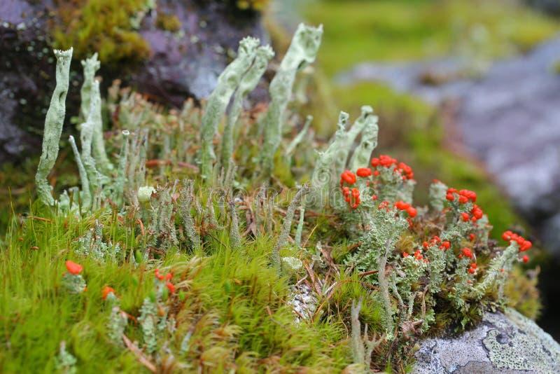 Textures de lichens, les Monts Oural, stouns, ornements image stock