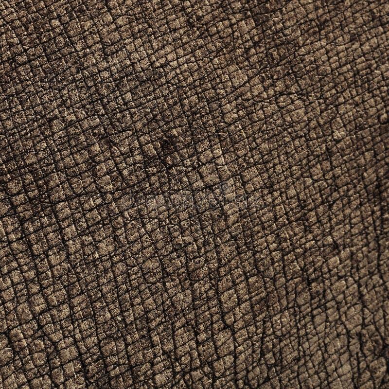 Textures de peau de rhinocéros images stock