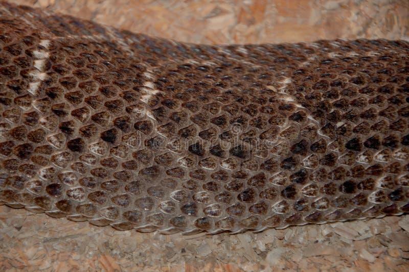 Textures de peau de serpent Le serpent de Brown mesure le fond avec les rayures blanches photographie stock libre de droits