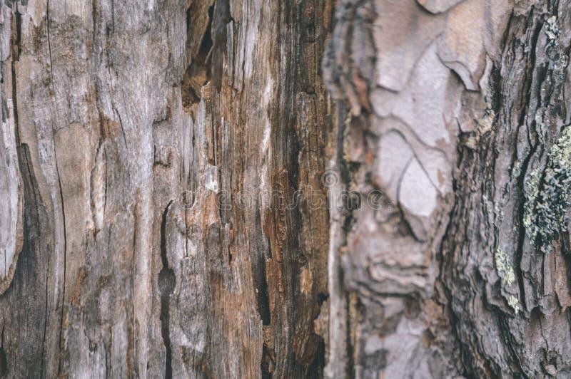 Textures de tronc d'arbre dans l'environnement naturel - regard de film de vintage image libre de droits