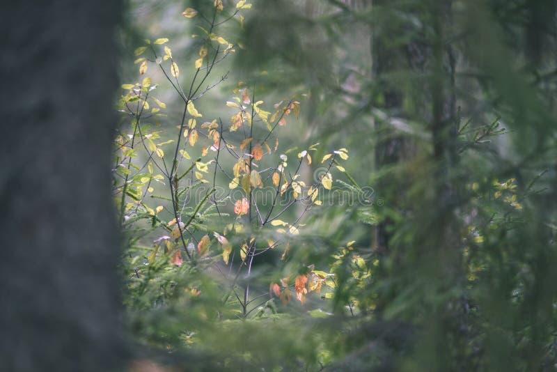 Textures de tronc d'arbre dans l'environnement naturel - regard de film de vintage image stock