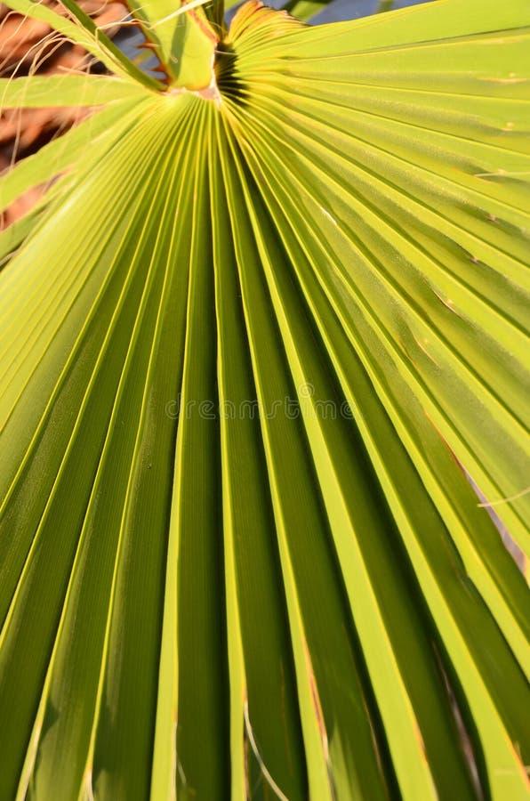 Download Textures Des Palmettes Vertes Image stock - Image du lame, configuration: 45367087