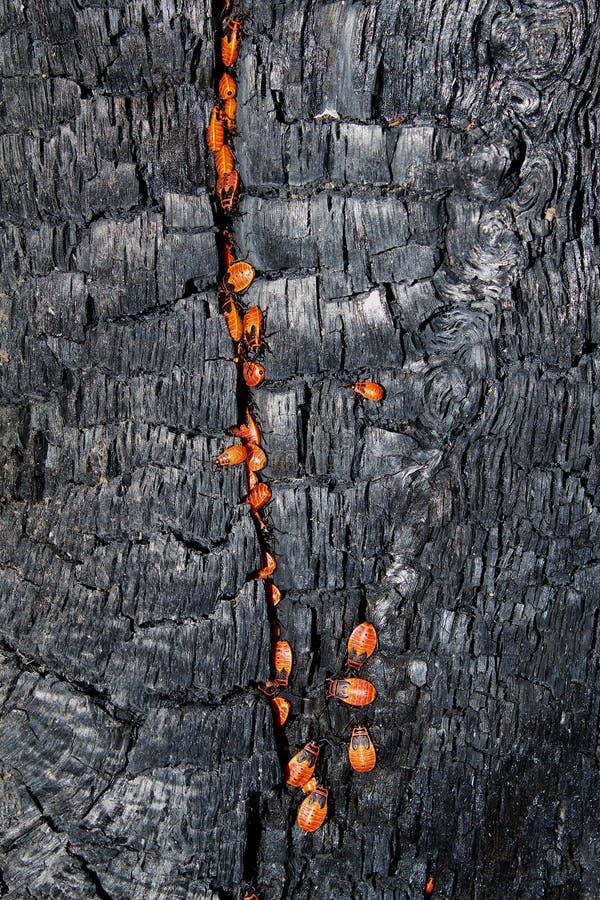 Textures el árbol quemado foto de archivo libre de regalías