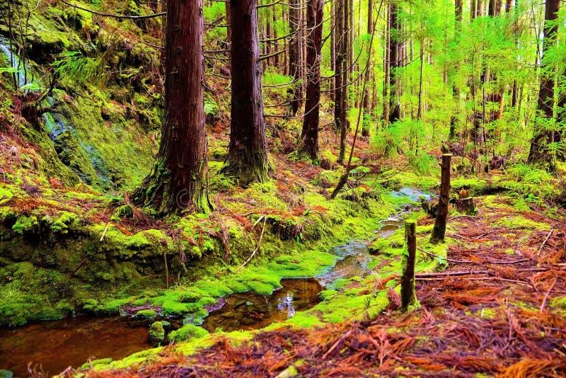 Textures et modèles de Forest Autumn Colors, enchanté, beaux, fond de nature image libre de droits