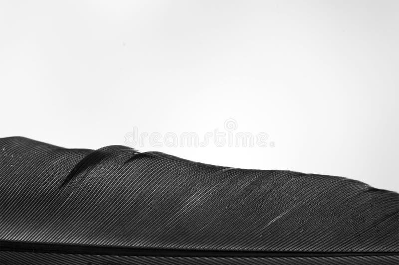 Textures noires et blanches images stock