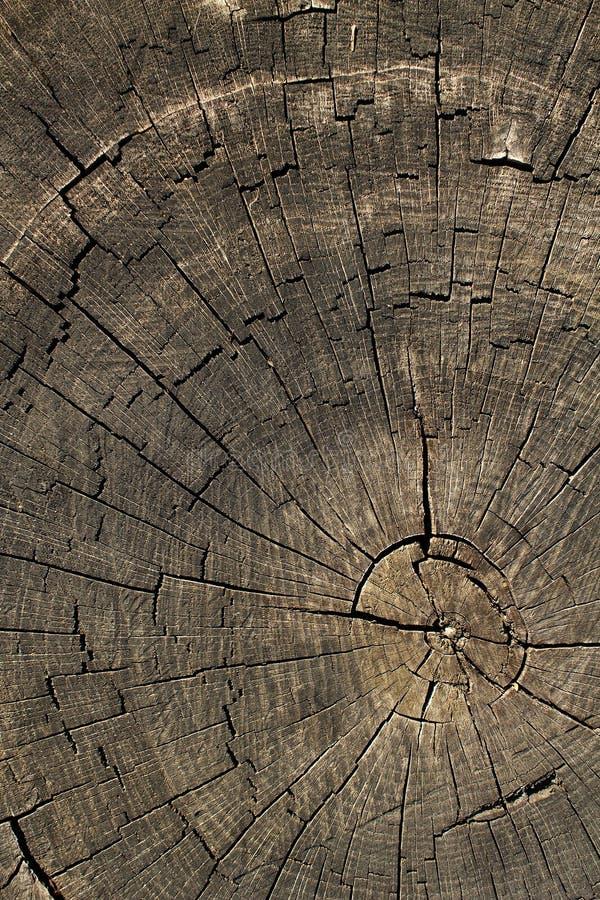 Textures o carvalho da árvore foto de stock