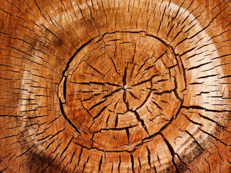 Textures o poplar da árvore imagem de stock