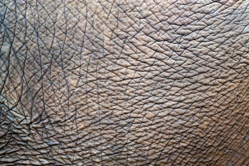 Textures and patterns of Asian elephants. royalty free stock image