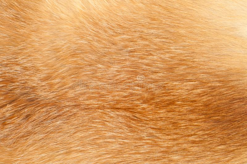 Textures red fox fur. Red fox shaggy fur texture cloth abstract, furry rusty texture plain surface, rough pelt background in horizontal orientation, nobody stock image