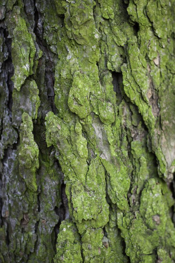 Textures of the spruce tree bark stock images