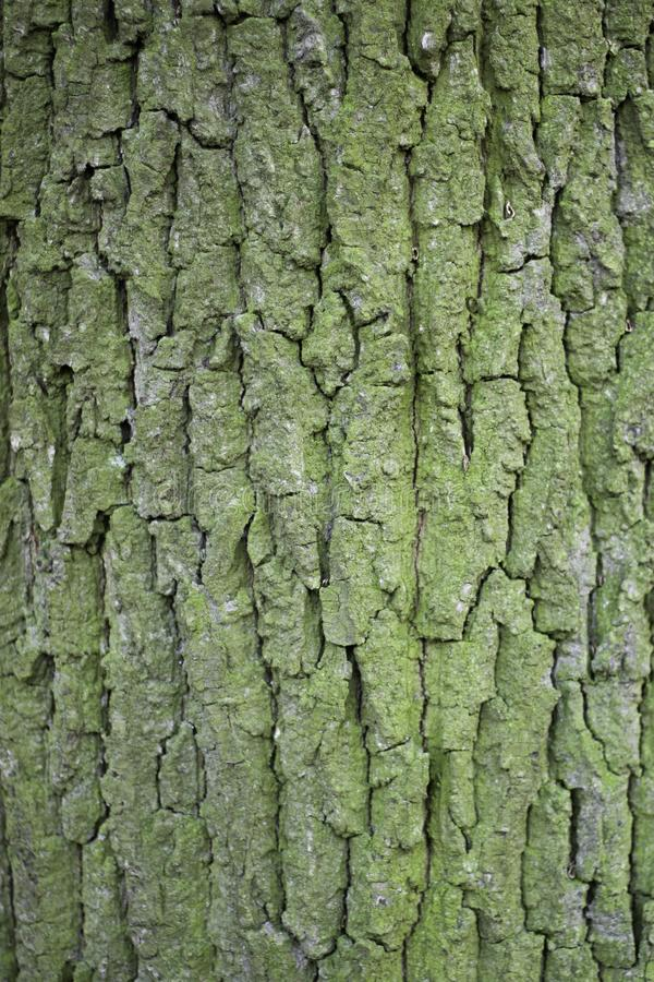 Textures of the spruce tree bark royalty free stock photos
