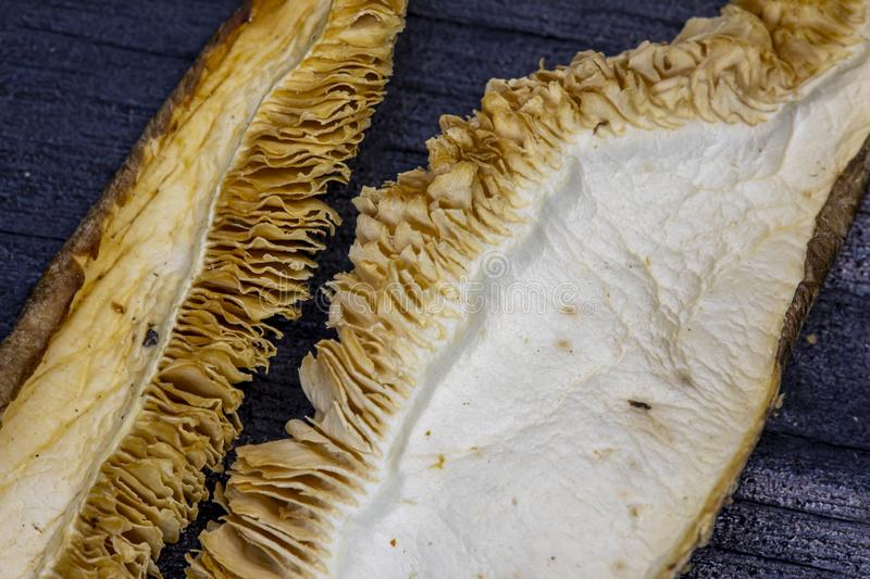 Textures of wild mushrooms with gills stock images
