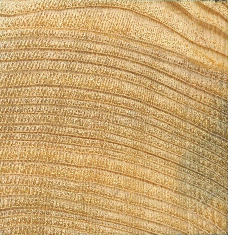 Texturice la madera amarilla de la especie conífera spruce, pino El corte transversal de una sierra imágenes de archivo libres de regalías