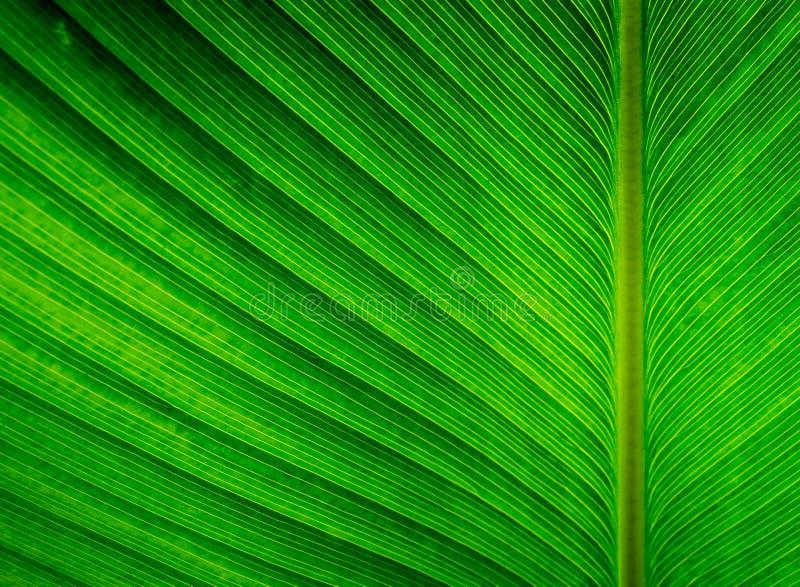 Texturice la superficie de la hoja de la planta del cigarro, fondo verde imagen de archivo libre de regalías