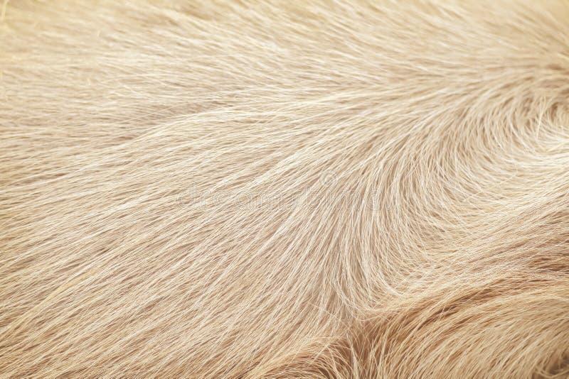 Texturice los modelos naturales del caballo de la textura limpia marrón de la piel para el fondo fotos de archivo