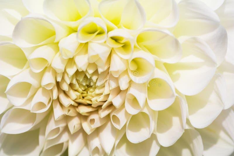 Texturiza el detalle hermoso del primer de la flor fotos de archivo