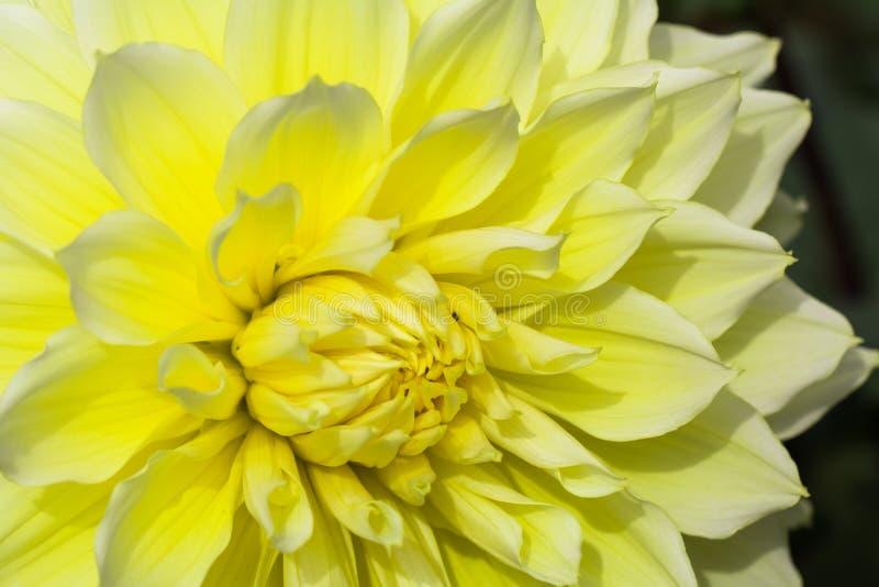 Texturiza el detalle hermoso del primer de la flor imagenes de archivo