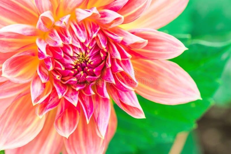 Texturiza el detalle hermoso del primer de la flor fotos de archivo libres de regalías