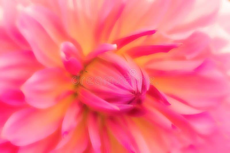 Texturiza las flores hermosas en estilo suave fotos de archivo libres de regalías