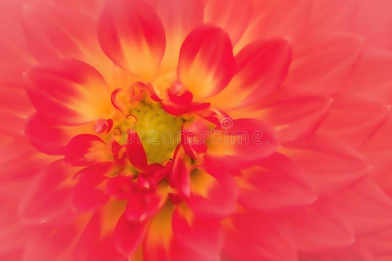 Texturiza las flores hermosas en estilo suave fotografía de archivo