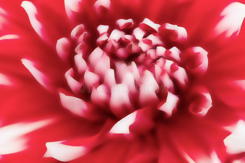 Texturiza las flores hermosas en estilo suave fotos de archivo