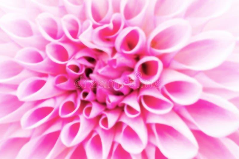 Texturiza las flores rosadas hermosas en estilo suave imagenes de archivo
