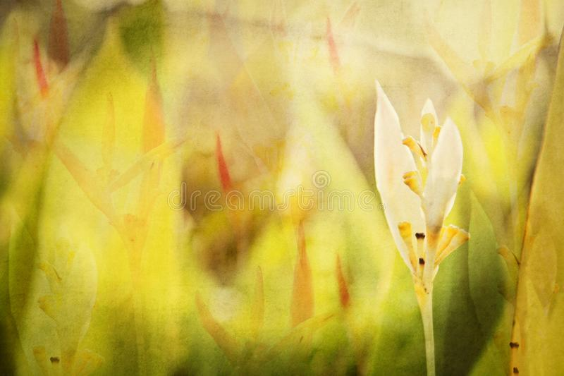 Texturizado, acodado, complejo, fondo floral de un jardín en México Acuarela de Digitaces ilustración del vector
