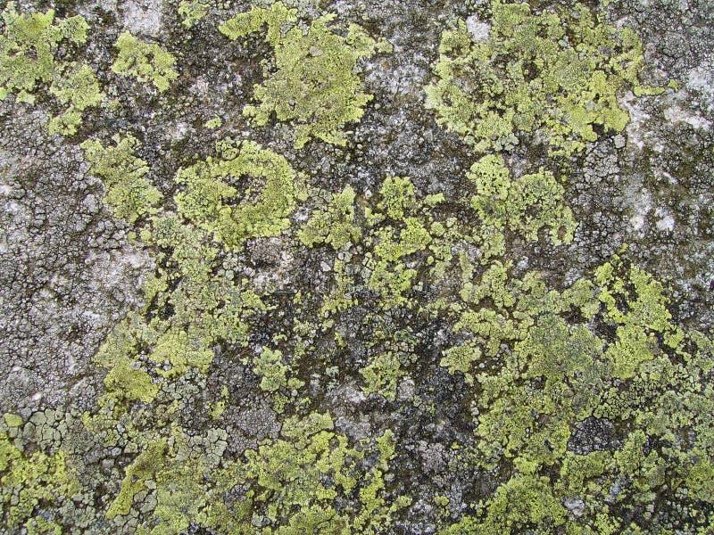 Textuur 1 van de rots stock afbeeldingen