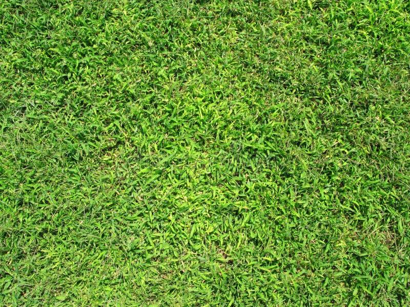 Textuur 1 van het gras royalty-vrije stock foto's