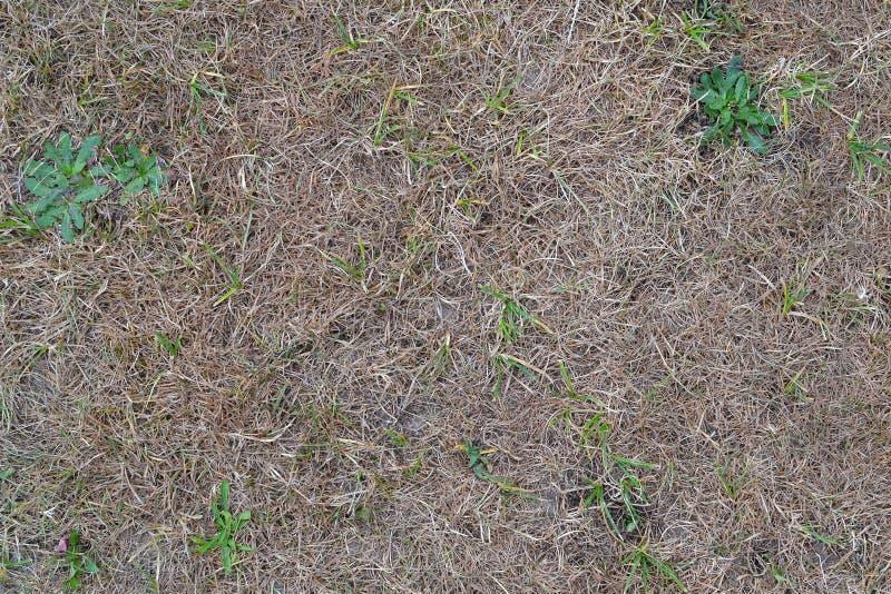 Textuur 9917 - droog gras royalty-vrije stock afbeelding